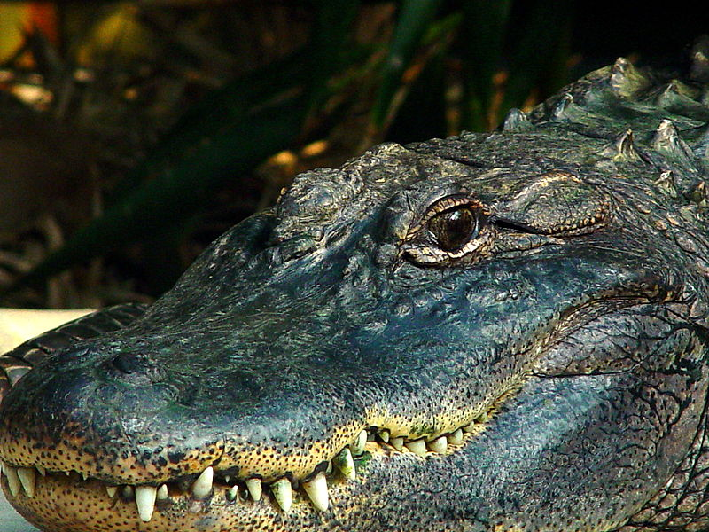 5c Crocodile Nutrition and Respiration