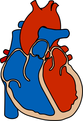 3 Respiration and Circulation
