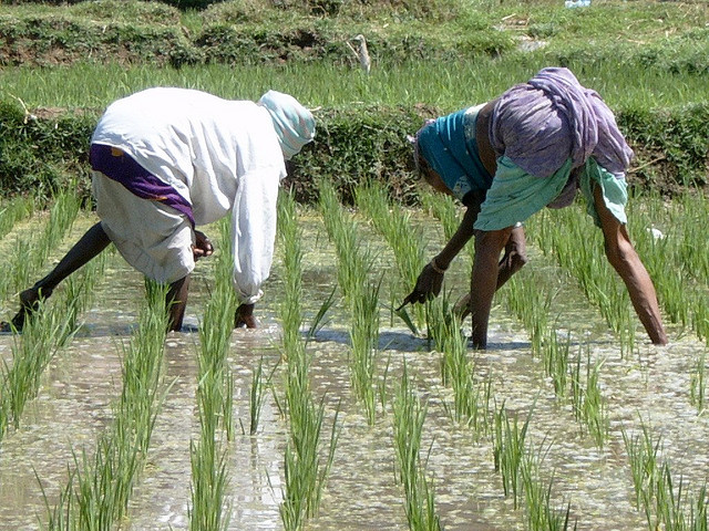 5a Rice Farming